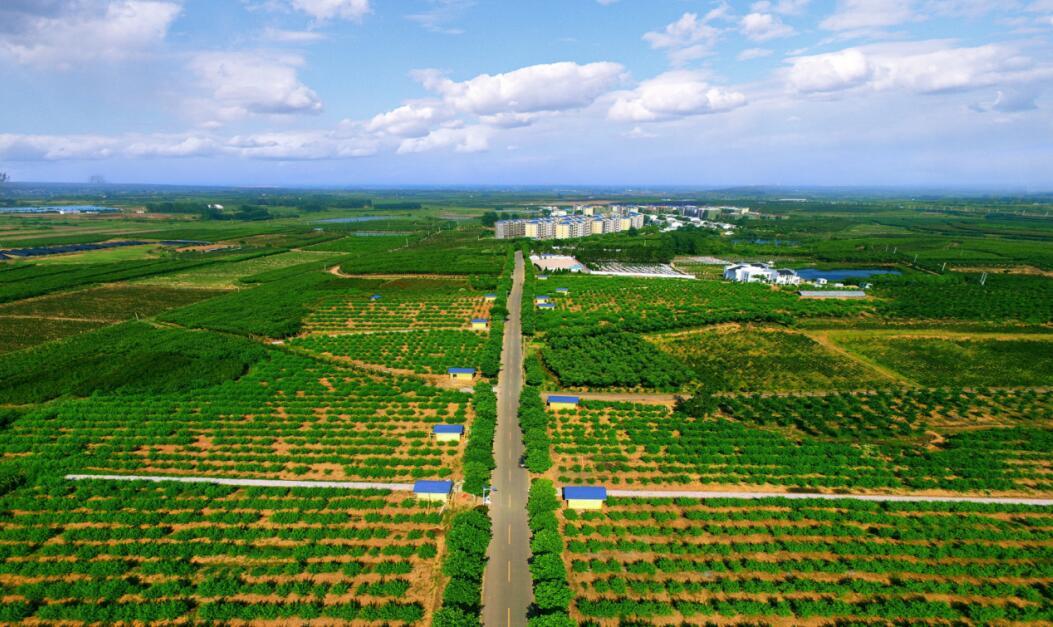在肥西,随处可见绿色盎然,闻花香四溢。肥西县委宣传部供图.jpg